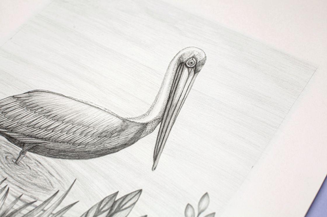 Pelikán hnědý