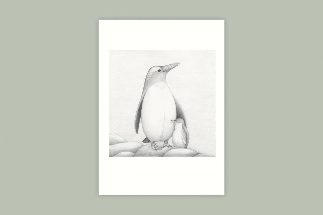 Tučňák oslí